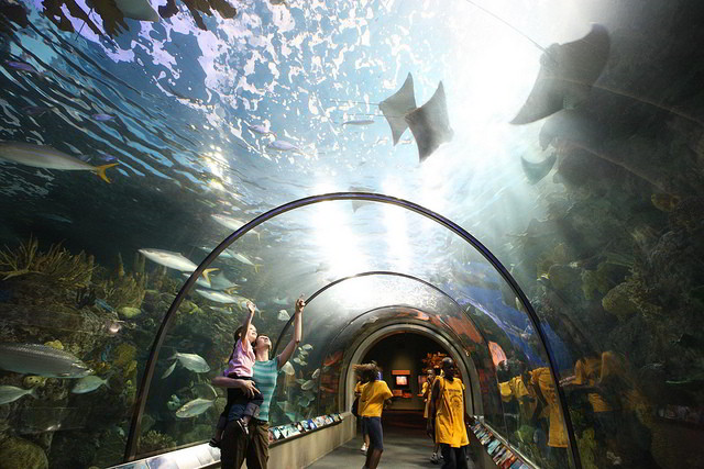 The kids can get up close and personal with stingrays, penguins and otters at the Audubon Aquarium of the Americas in the French Quarter. (Photo courtesy Louisiana Travel on Flickr)
