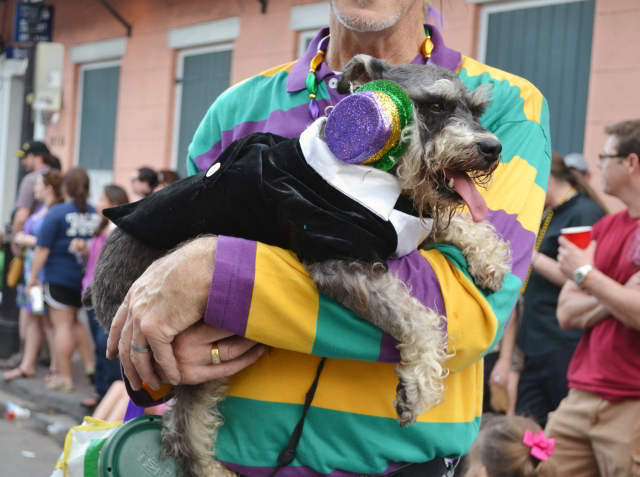 Mardi Gras Parade Schedule: Where to Go and What to See